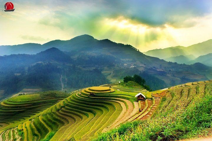 arrozal sapa